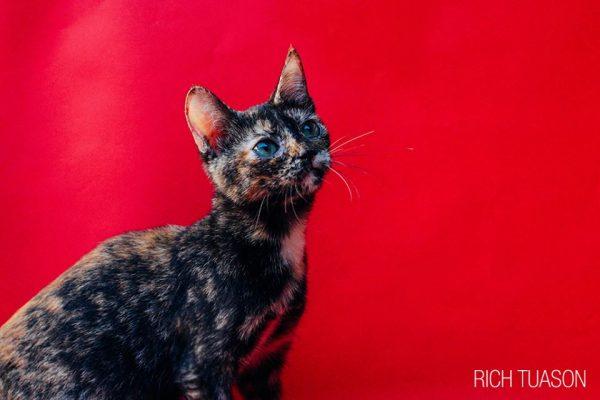 Name a kitten!