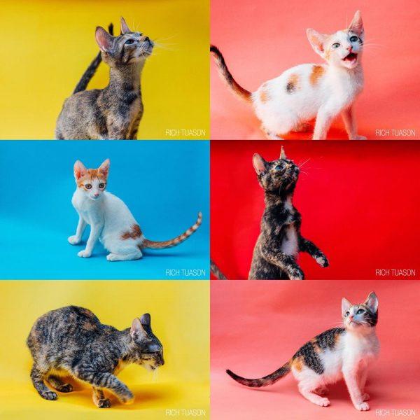 Halfway through the Name-a-Kitten week!