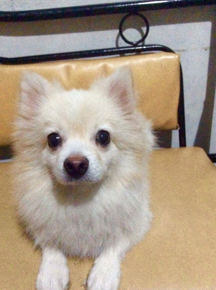 LOST DOG: Mio