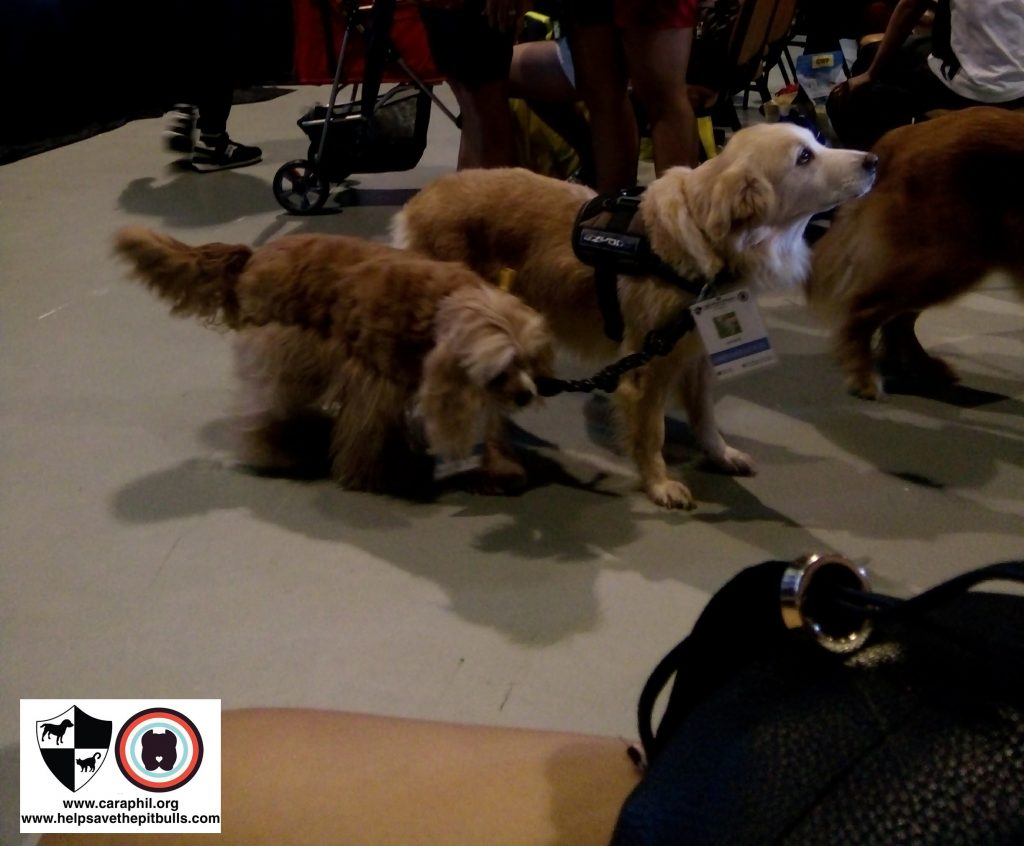 Cat and Dog Pet Expo 2017 kimchi and ginger