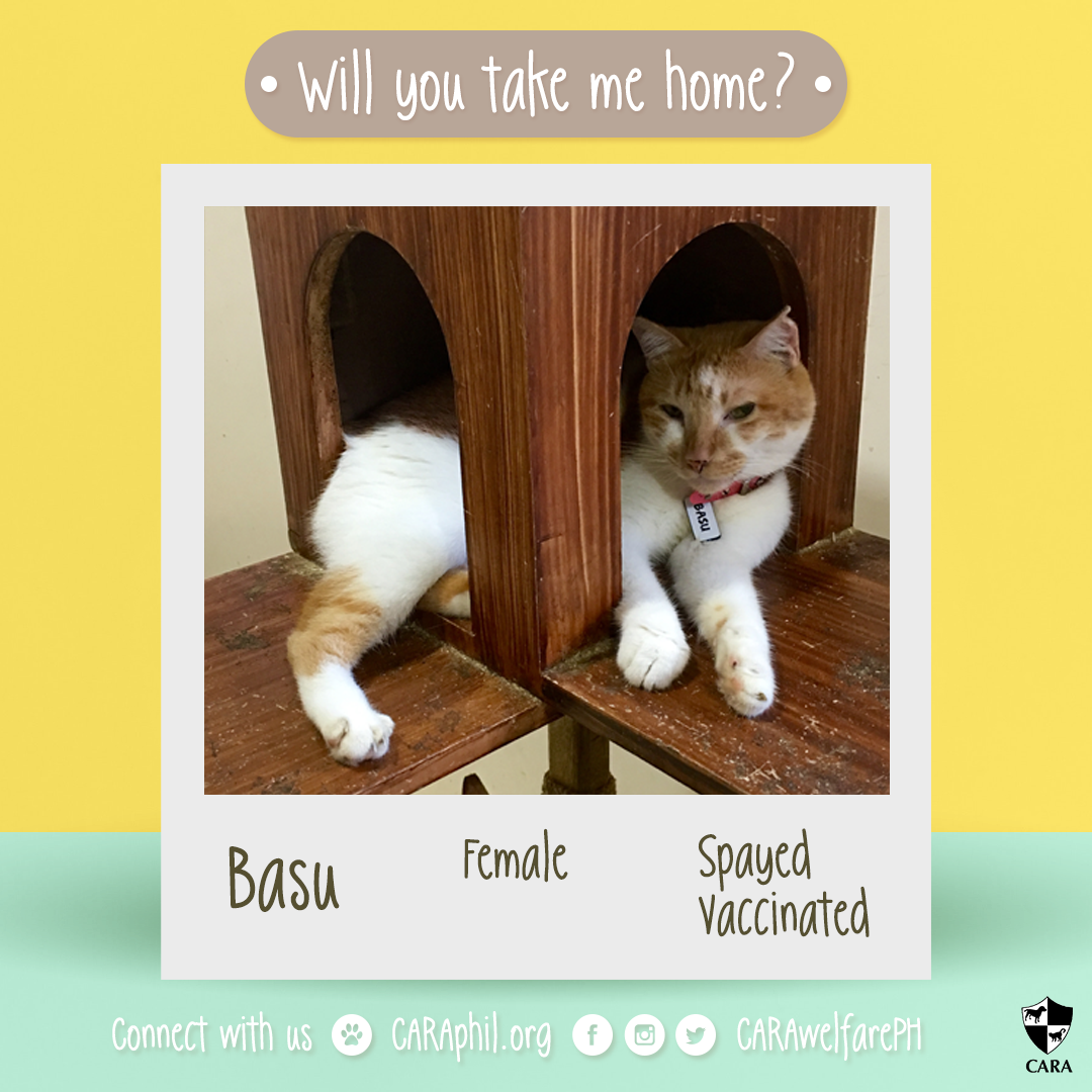Adoptable of the week: Basu!