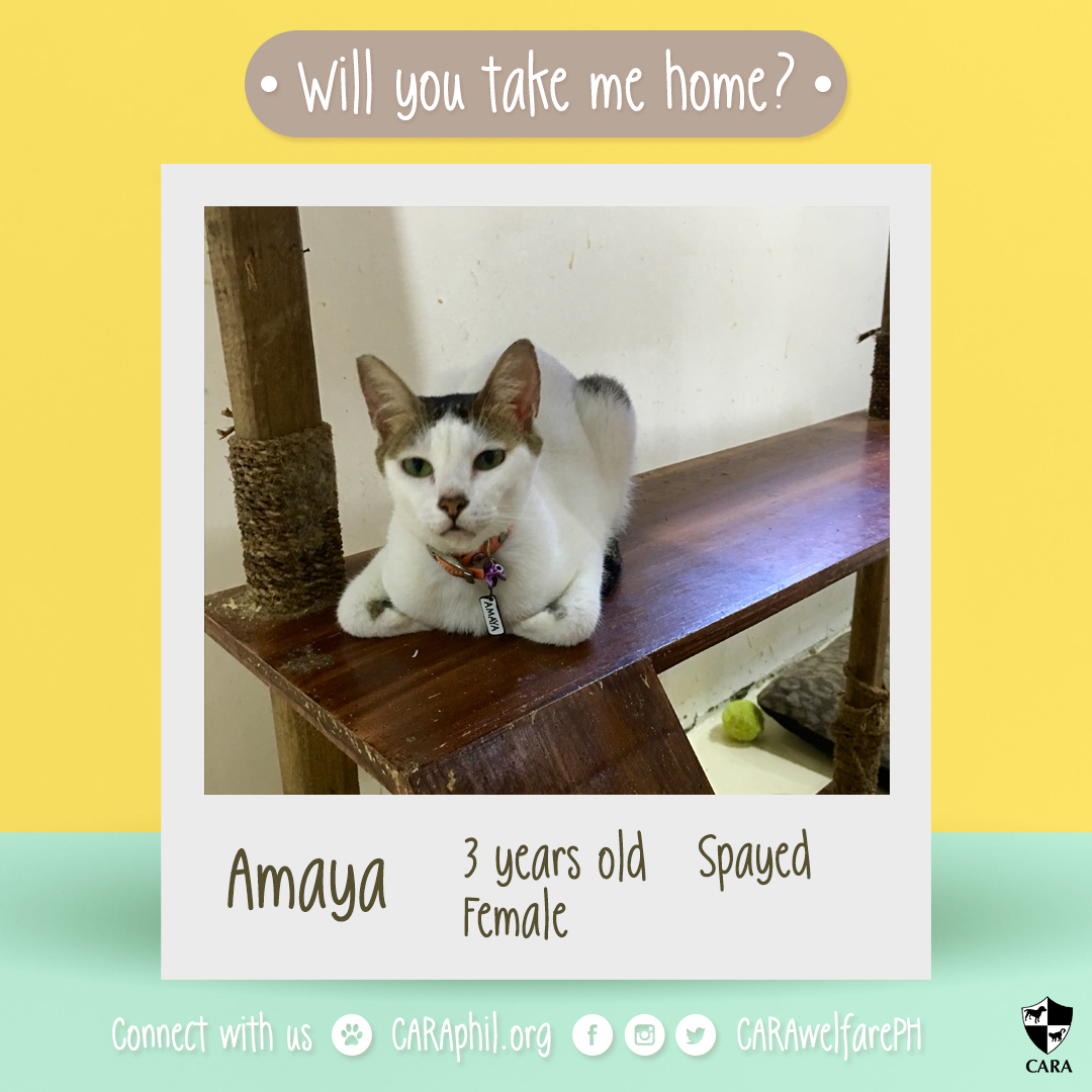 Adoptable of the week: Amaya!