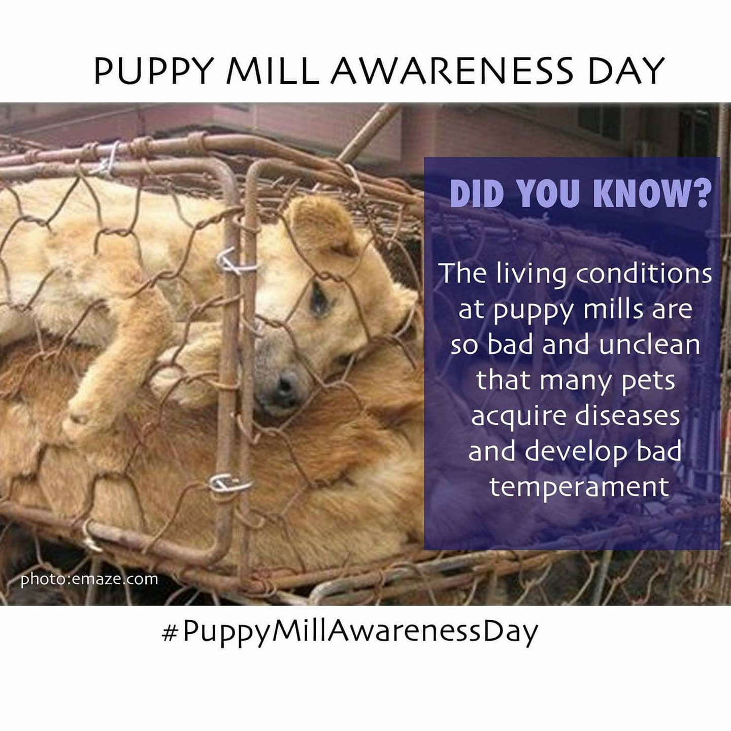 September 16: Puppy Mill Awareness Day!