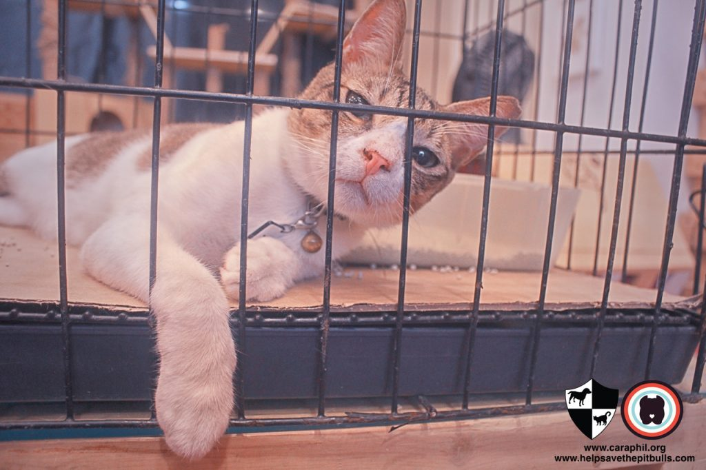 Sept-2017-Cat-Kitten-Adoption-CatCafeManila