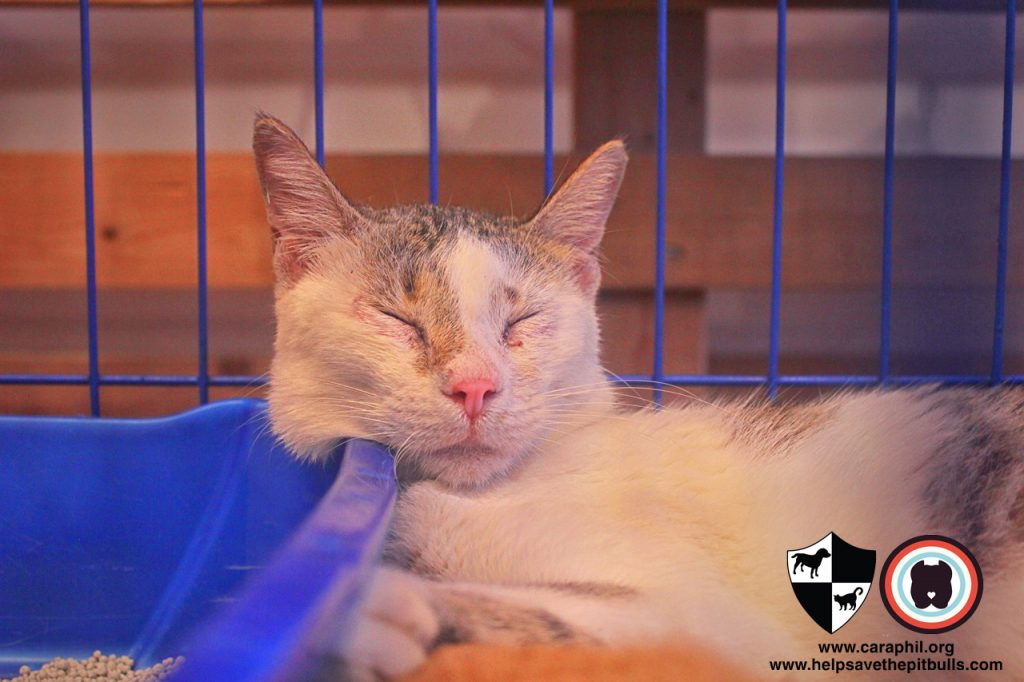 Sept-2017-Cat-Kitten-Adoption-CatCafeManila-Cat
