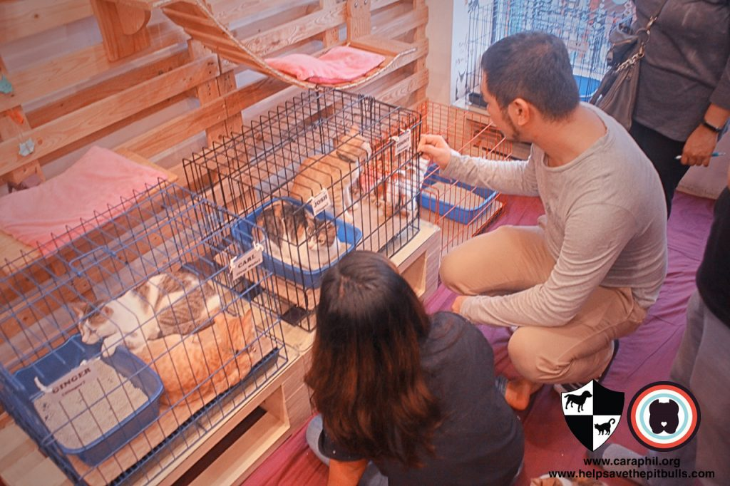 Sept-2017-Cat-Kitten-Adoption-CatCafeManila-People-Guestss
