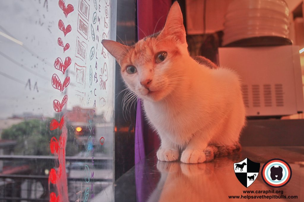 Sept-2017-Cat-Kitten-Adoption-CatCafeManila-Cafe