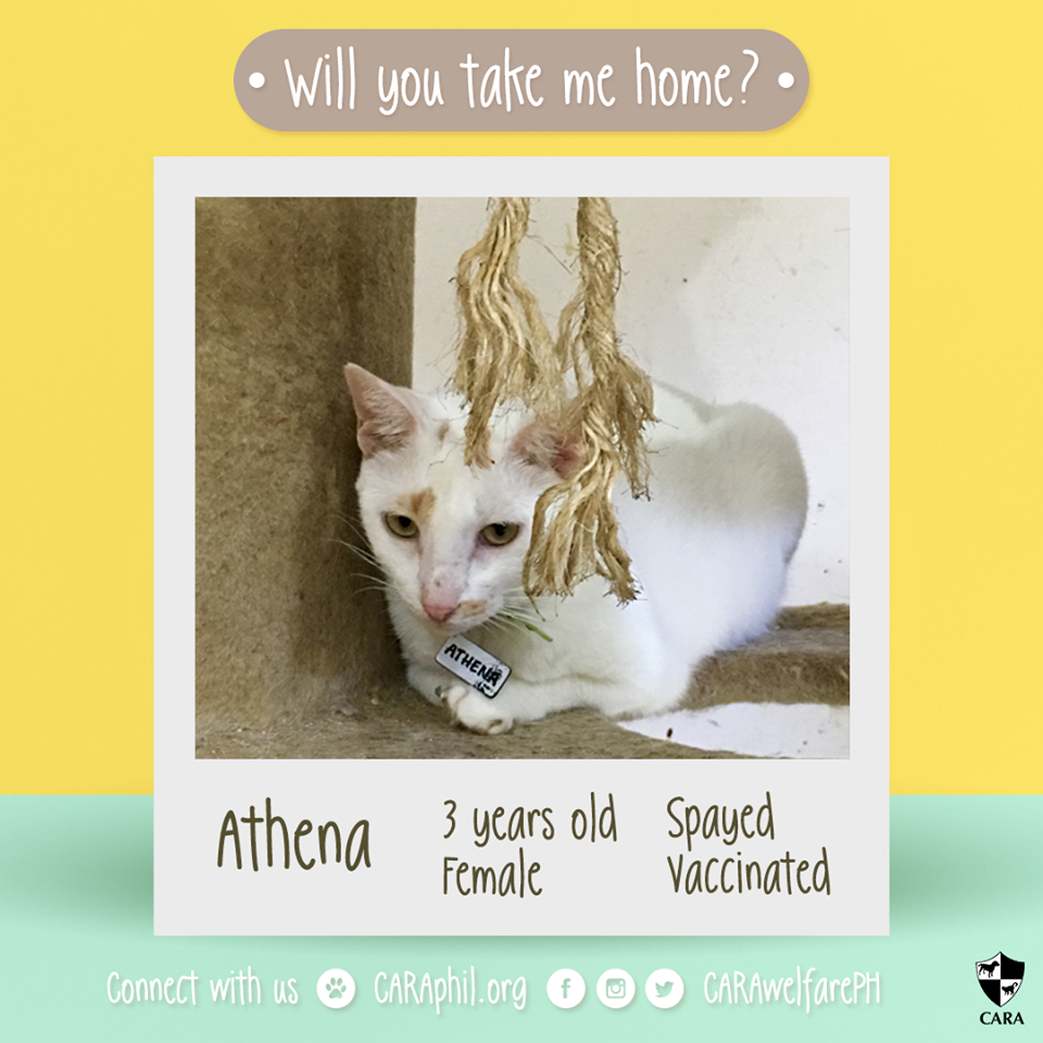 Adoptable of the week: Athena!