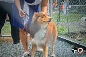 Oct 2017 Ayala Alabang Village Dog Park CARA Welfare Philippines Events doggie
