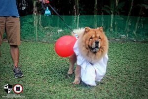 Oct 2017 Ayala Alabang Village Dog Park CARA Welfare Philippines Event doggie IT