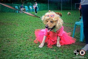 Oct 2017 Ayala Alabang Village Dog Park CARA Welfare Philippines Event doggie costume retro