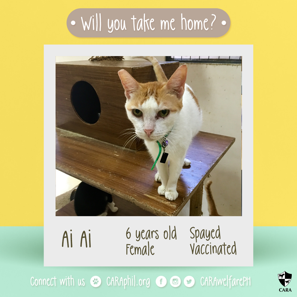 Adopt Me Please! -CARA cat Ai-Ai