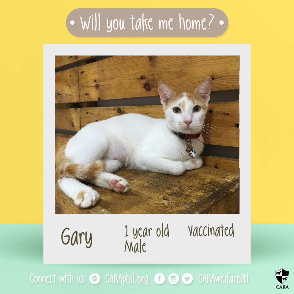 CARA Cat Gary Is Looking For A Forever Home!
