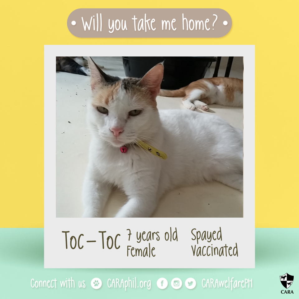 October 2017 - CARA Cat-Toc Toc-Featured Adoptable- CARA Welfare Philippines - AdoptDontShop