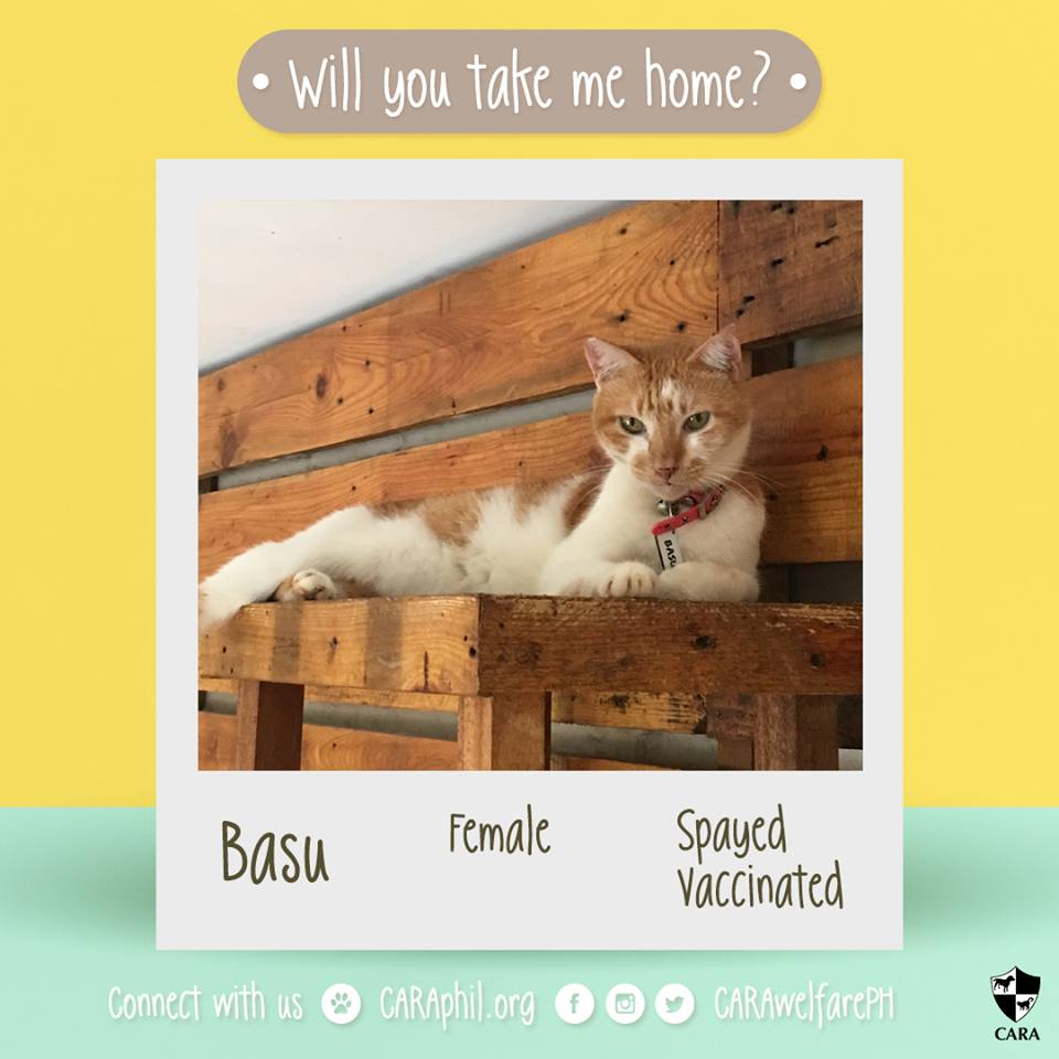 CARA Cat Basu Is Looking For A Forever Home!