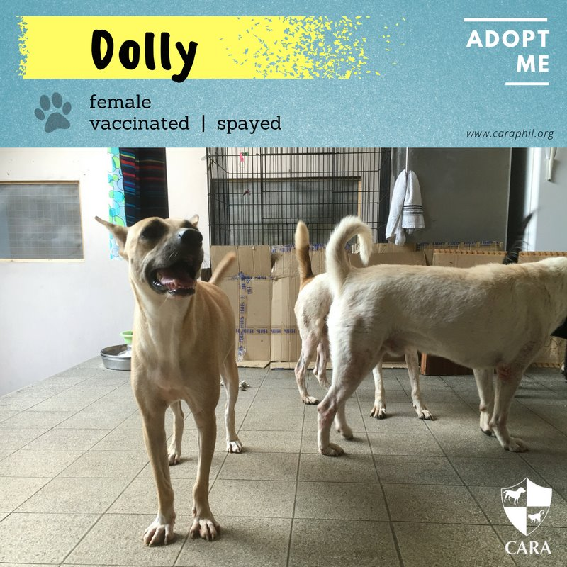 Adoptable of the Week: Dolly!