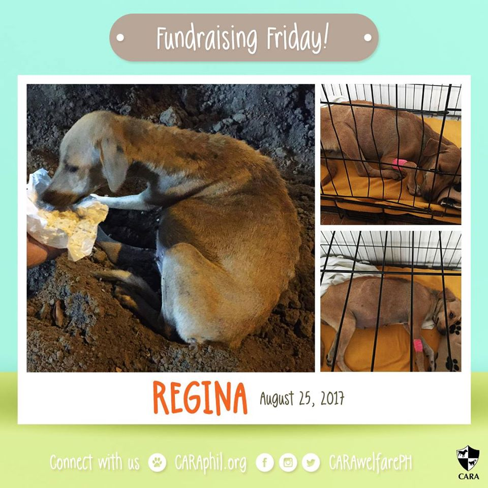 FundraisingFriday: Regina