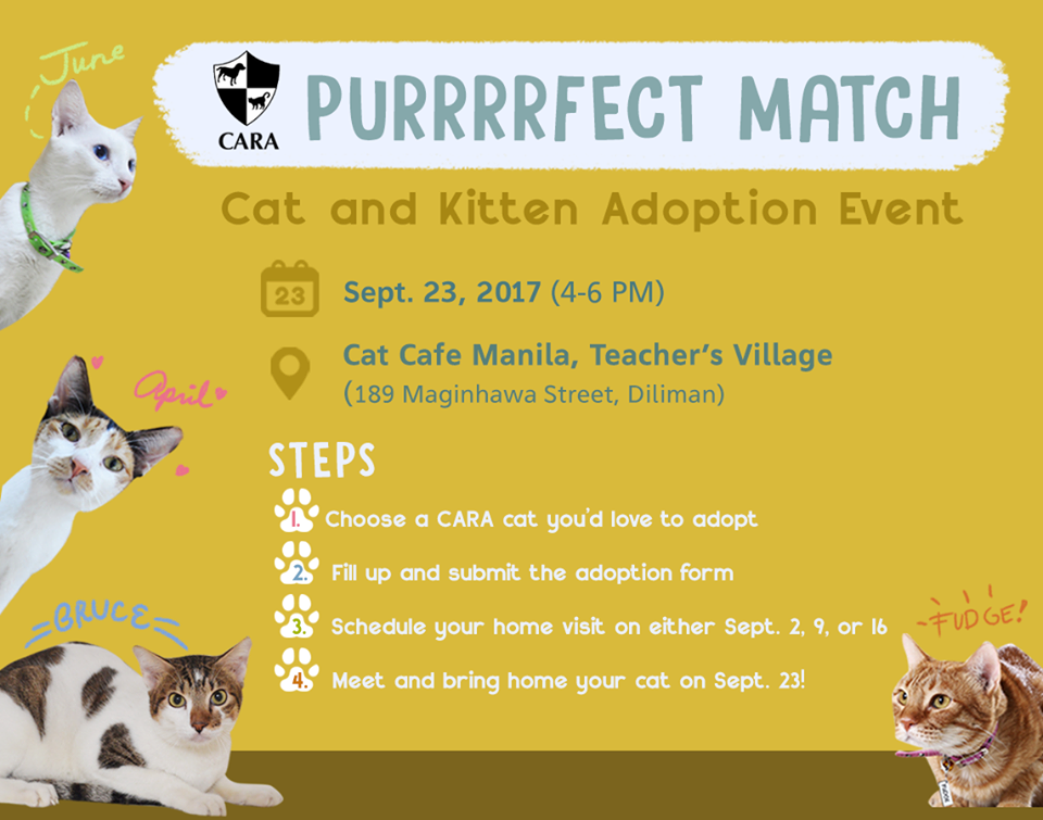 CARA Purrrfect Match: Cat and Kitten Adoption Event!