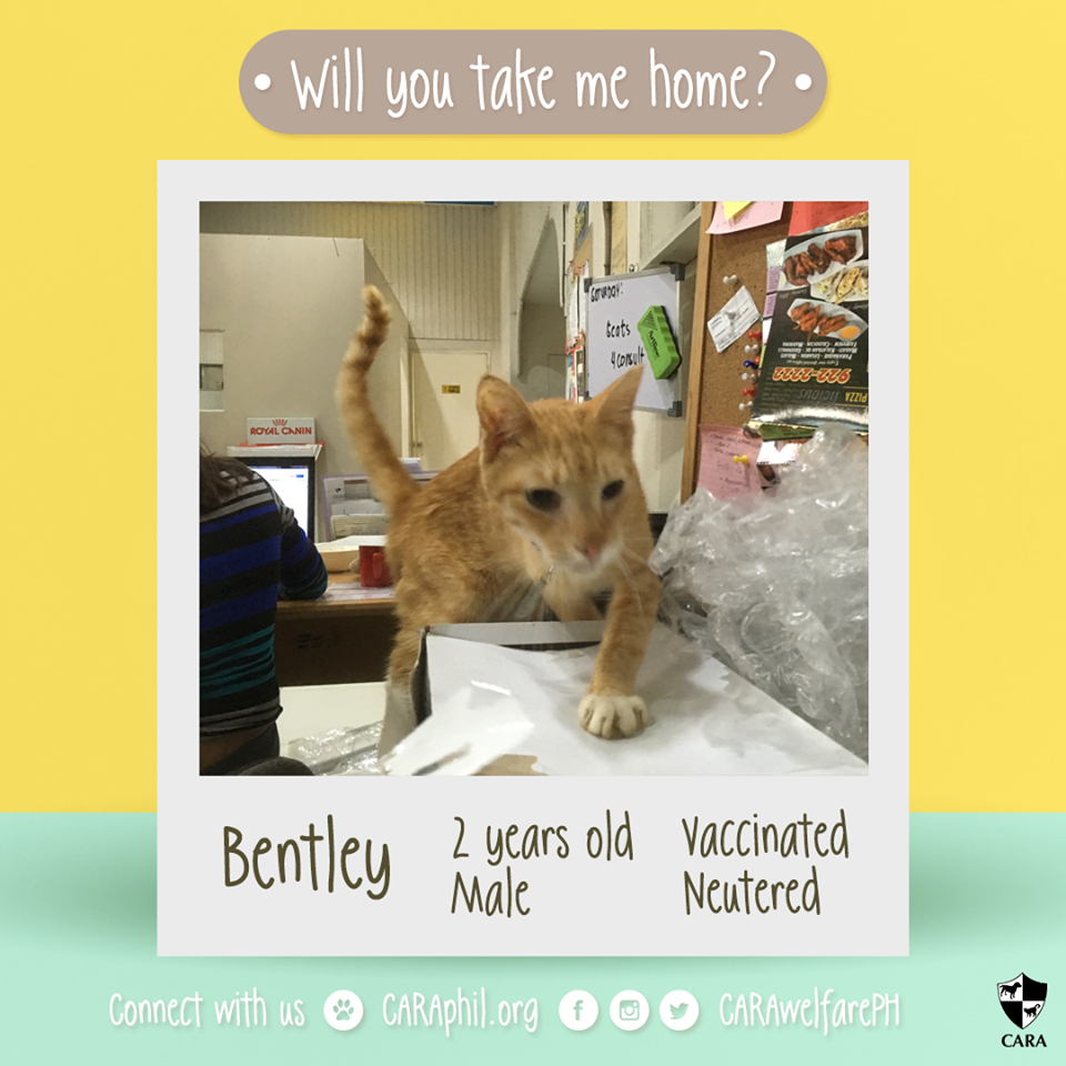 Adoptable of the Week: Bentley!