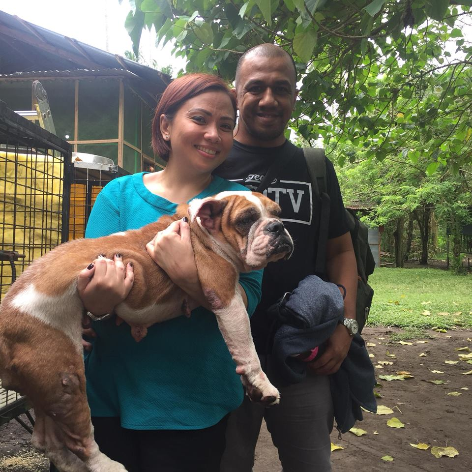 Becky the English Bulldog Rescue Found Her Forever Home!