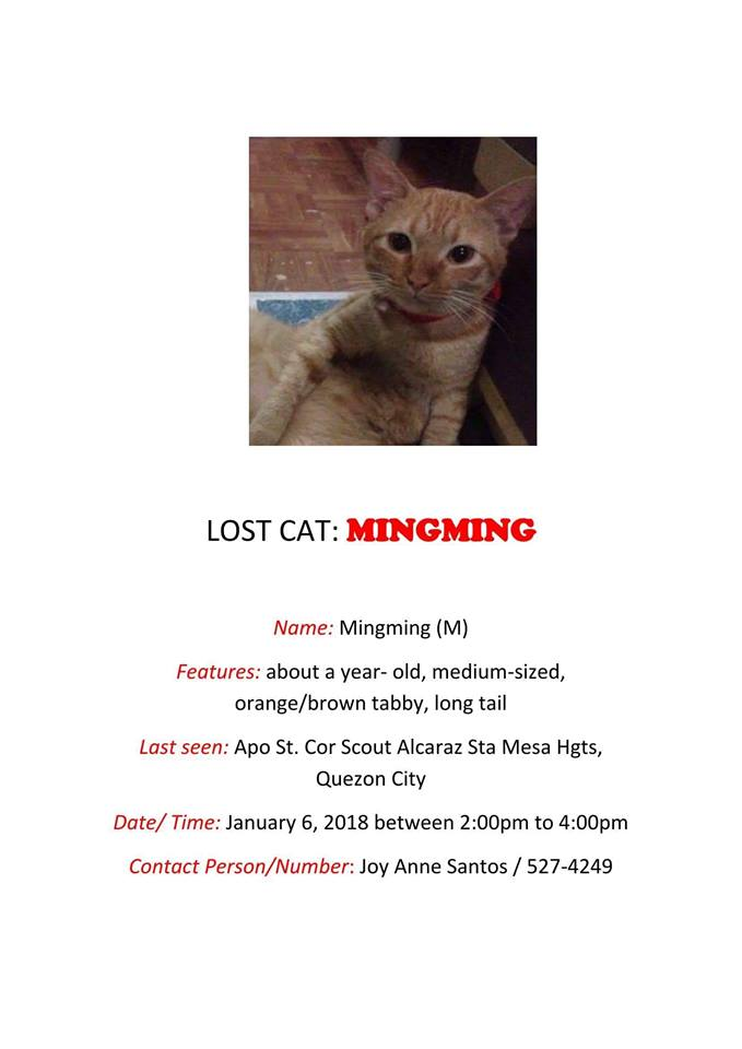 Jan 2018 - Lost Cat Mingming Sta Mesa Heights Quezon City CARA Welfare Philippines - AdoptDont Shop