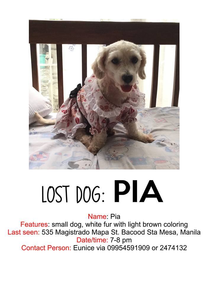 Please Keep A Look Out For These Lost Pets (Pia & Mingming)