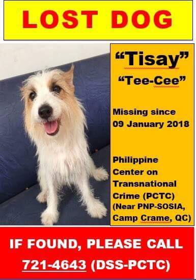 Let's Help Find Missing Dog Tisay Around Quezon City