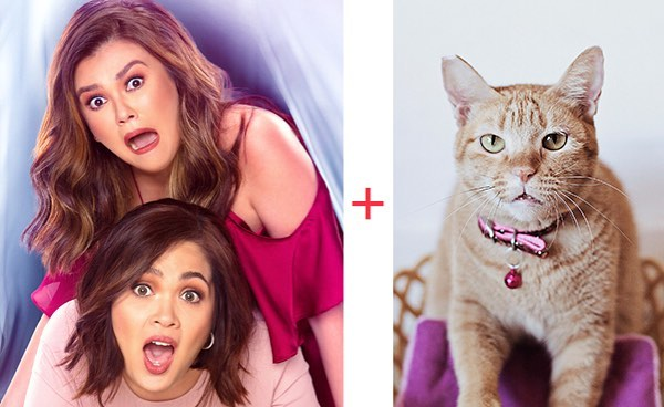 CARA Cat Bunny Is Now A Movie Star!
