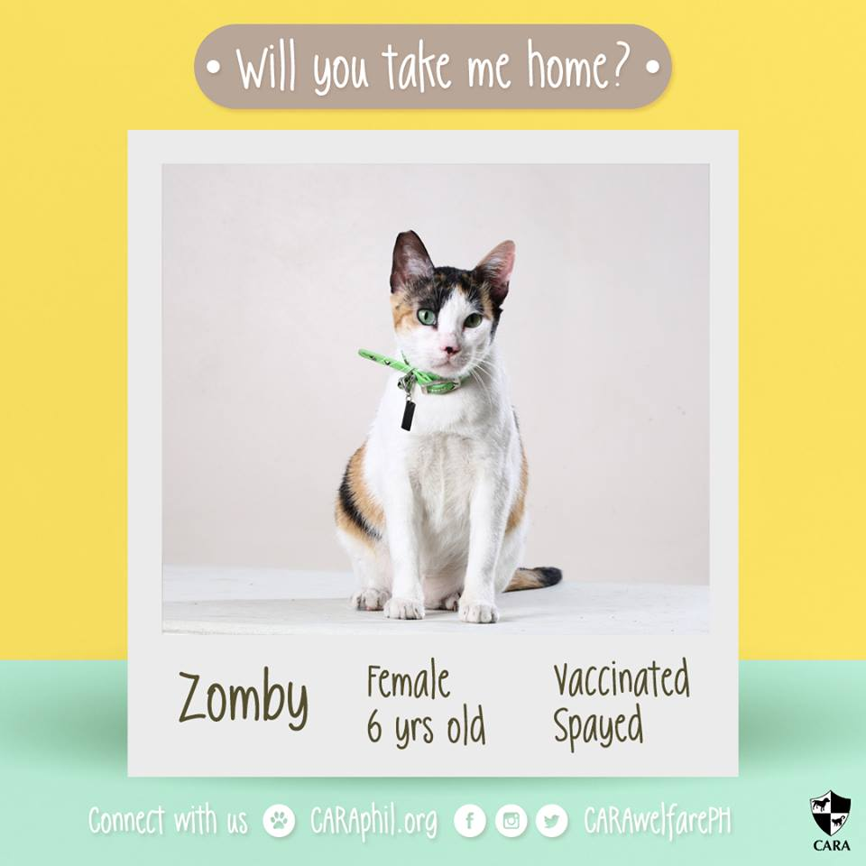 Jan 2018 - Featured CARA cat Zombie CARA Welfare Philippines - AdoptDont Shop