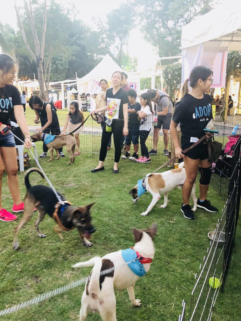 Strike, Sweetie, and Kulit at Waggin Tales 2018 by Trina Kiedis