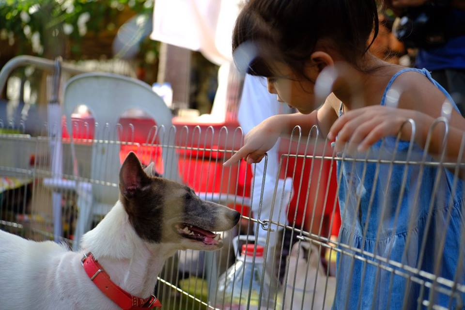 CARA Welfare Philippines - animal welfare - volunteer group