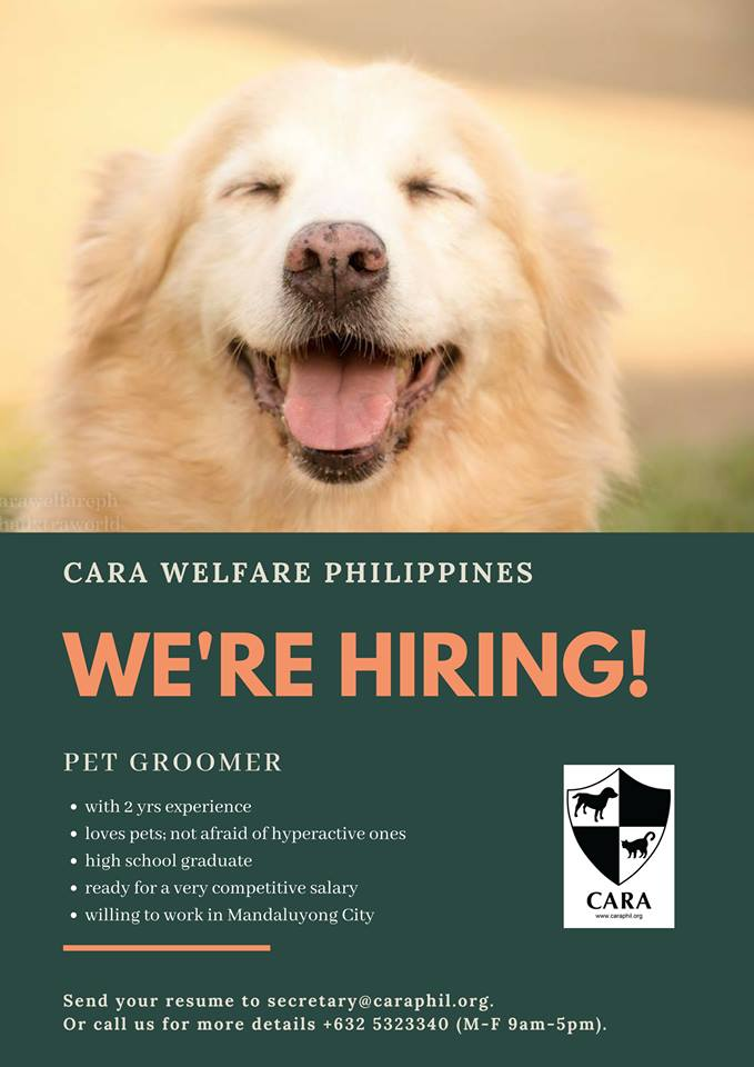 wanted pet groomer for CARA - animal welfare Philippines
